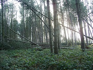 Storm damage, Sherwood Pines - geograph.org.uk...