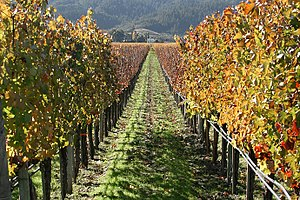 Lightmatter vineyard