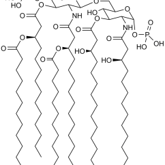 What Is A Molecular Diagram Simple Eye To Label Lipid Wikipedia