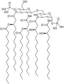 fat structure diagram 7 blade plug wiring structural biochemistry organic chemistry lipids wikibooks open chemical of the saccharolipid lipid a as found in e coli