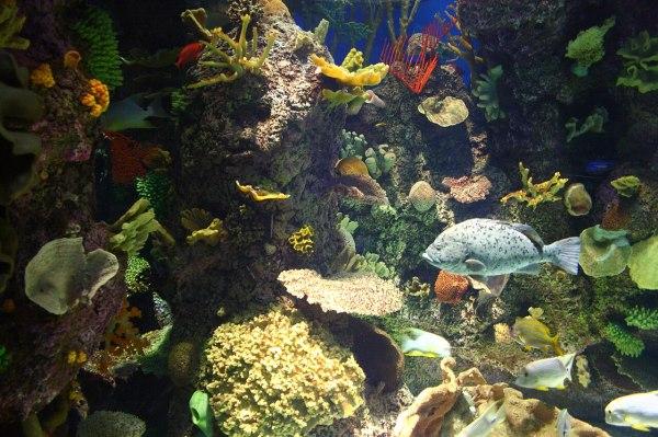 Shedd Aquarium Wild Reef
