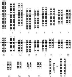 Representación gráfica del cariotipo humano normal.(Imagen 1)