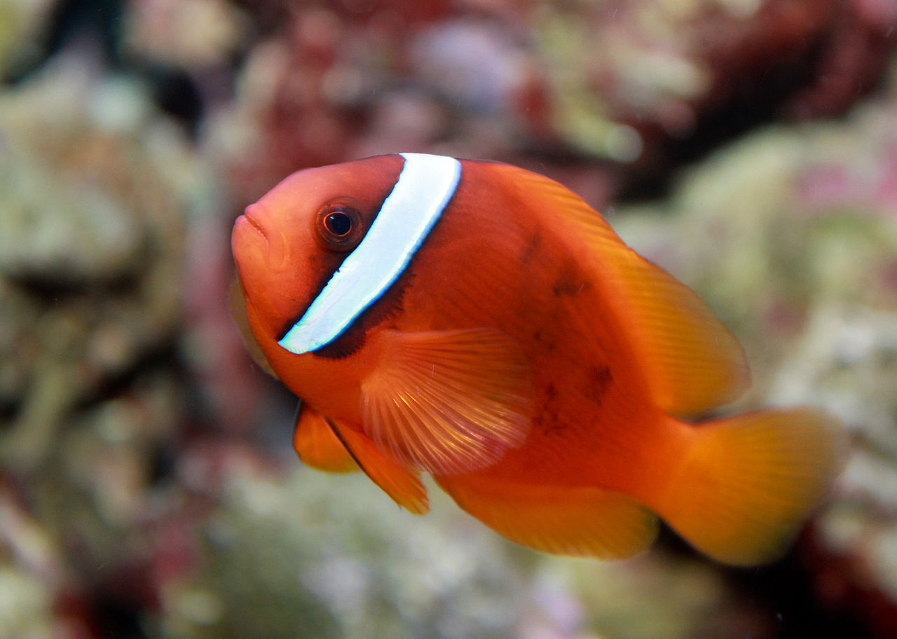 Clownfish - Inspirational Interior style concepts for lounge style
