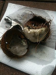 List of coconut palm diseases  Wikipedia