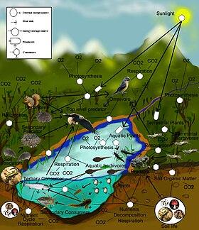 savanna animal food chain diagram 110 sub panel wiring web wikipedia
