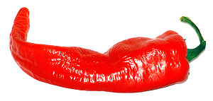 This image shows a Large Cayenne.