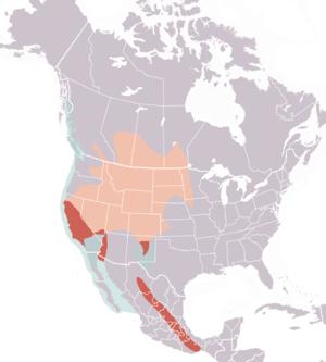 Western grebe range map