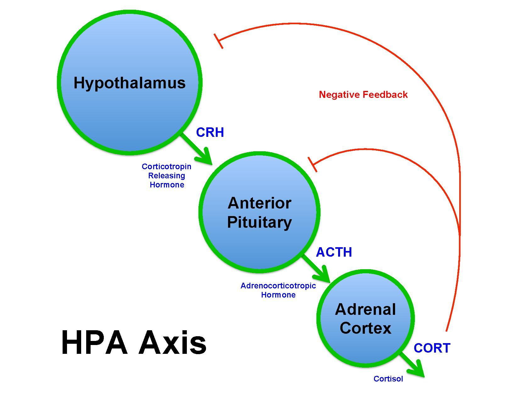 File Brian M Sweis Hpa Axis Diagram