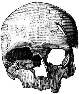 Female Cro-Magnon skull