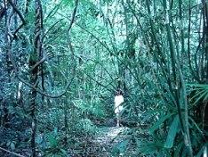 La jungle de Langkawi