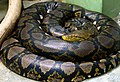 Foto Python