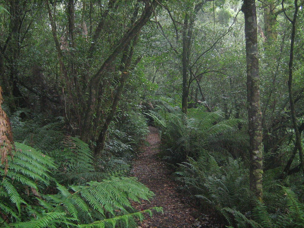 FileTemperate rainforest in Great Otway National Park