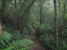 Temperate rainforest  Wikipedia