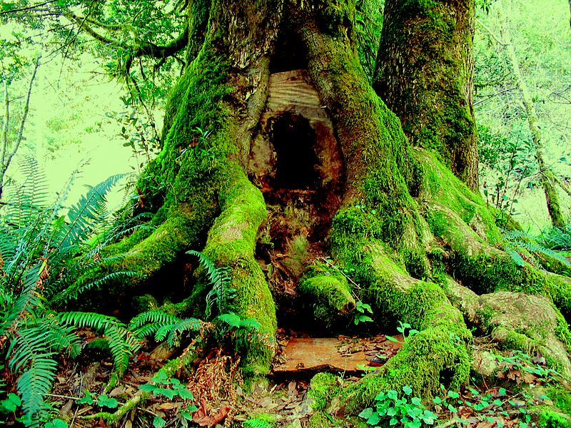 Cannibal Tree