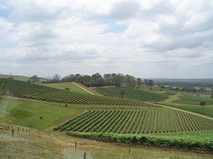 Hunter Valley vineyards.