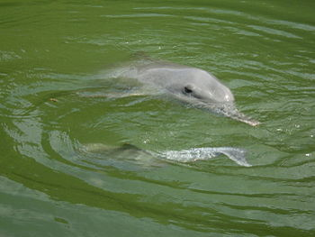 Mother and baby dolphin in the lake near the S...