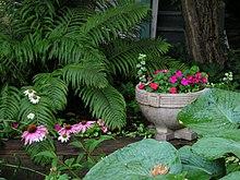 shade garden - wikipedia