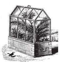 Pteridomania — My Botanical Garden