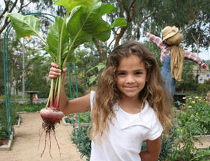 English: California AITC-A girl holds a beet i...