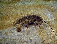 Hong Kong Bilim Müzesi'nde Eomaia Fosili