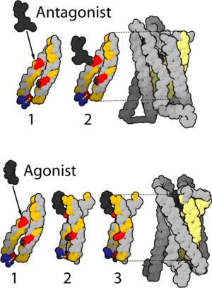 μ (Mu)-Opioid receptor. Based on OPM 2iql & 2i...