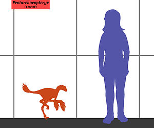 Size comparison between the extinct oviraptoro...