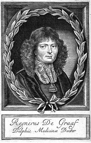 Nederlands: portret van Reinier de Graaf