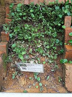 水龜草 - 維基百科,自由的百科全書