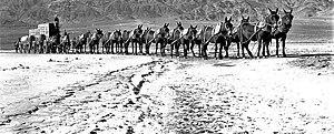 Twenty-mule team in Death Valley, California
