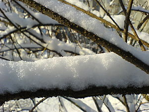 Fresh snow on a thin twig