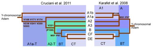 Haplogroup A tree