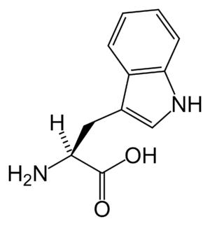 L -Tryptophan (Trp / W)