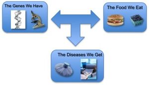nutrigenomics, flow chart, diet, genes, disease