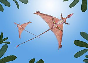 English: Life reconstruction of Sharovipteryx ...