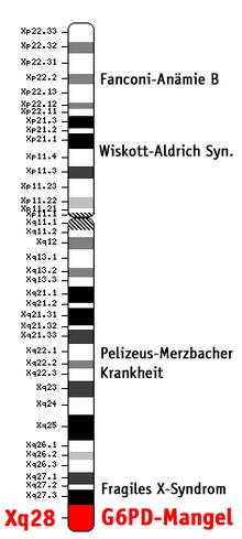 Biochemie und Pathobiochemie: Glucose-6-phosphat