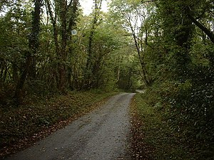 English: Road through the woods