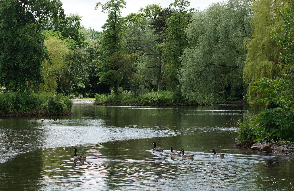 FileCanada geese on Ropner Park Lake Stockton on Tees