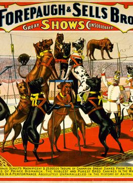 File:Champion great danes from the Imperial kennels, poster for Forepaugh and Sells Brothers, 1898.jpg
