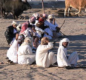 Barka (Oman). Bullfighting enthusiasts
