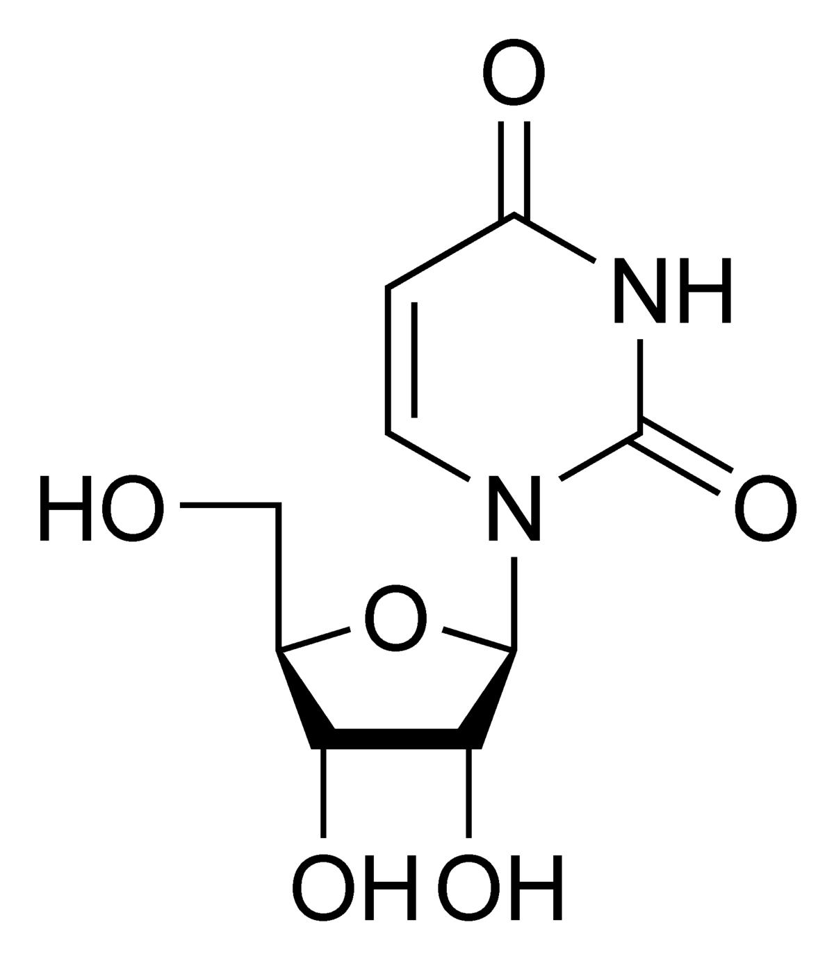 Uridine — Wikipédia