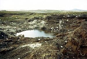 Falkland Islands, Stanley Airport, Black Buck ...