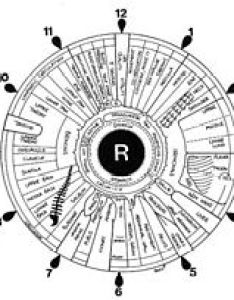 This is the corresponding chart for right iris which relates to side of body also iridology wikipedia rh enpedia