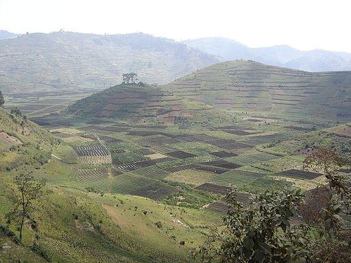 Rwanda - dense agriculture