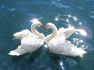 The swan is a symbol of purity and transcenden...