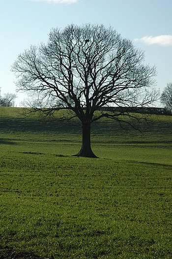 English: Bare winter tree Bare winter tree in ...