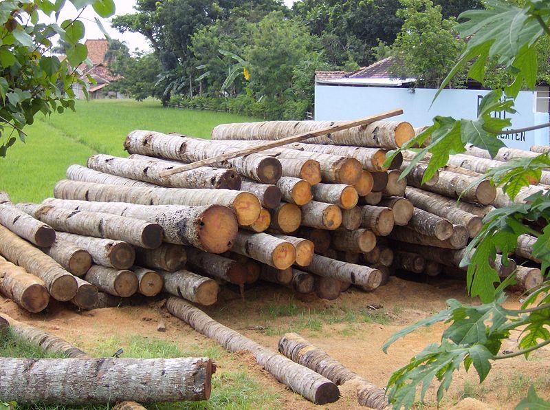 Coconut Wood In Java