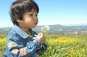 A child blowing a dandelion clock. Taken by me...