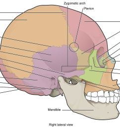lateral of skull blank diagram wiring diagrams scematicfile 705 lateral view of skull 01 jpg wikimedia [ 1280 x 878 Pixel ]