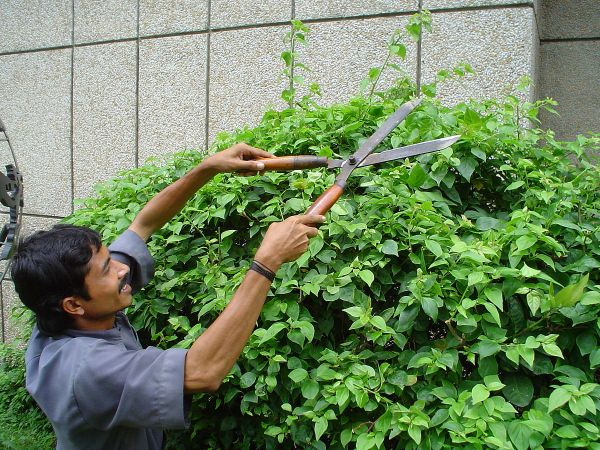 Hedge Trimmer - Wikipedia
