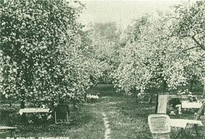A 1910 photograph of The Orchard in bloom